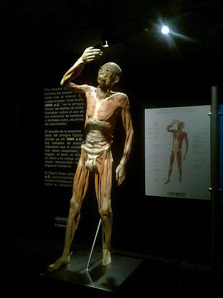 Fotografie z podobné výstavy Human body v Chile; zdroj: Wikipedia, Jorgebarrios